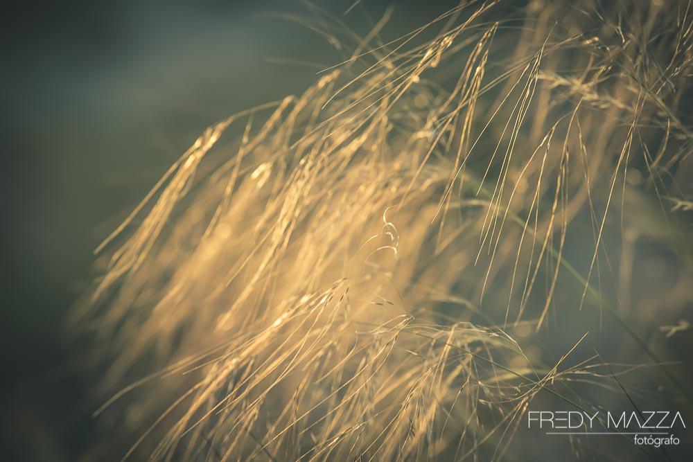 Fotografo bodas Murcia Molina Video Fredy Mazza